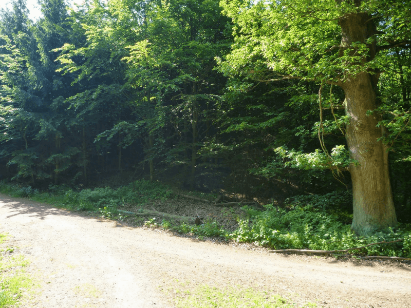 Thüringer Wald bei Eisenach