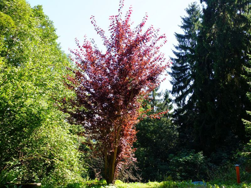 Ein Baum im Garten der Roten Villa in Themar