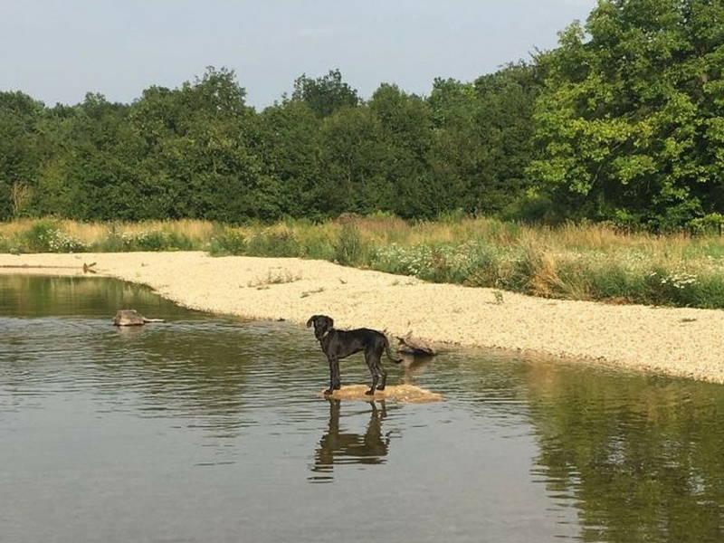 Hund beim Baden am Stausee in Thüringen