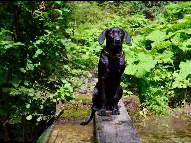 Hund auf einer Brücke am Fluss in Thüringen