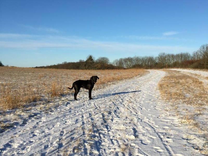 Hund auf einer Straße mit Schnee in Thüringen